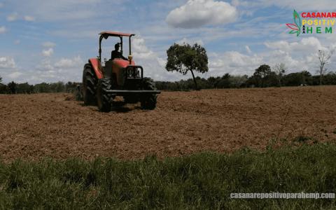 Cañamo-Industrial-en-Casanare-2
