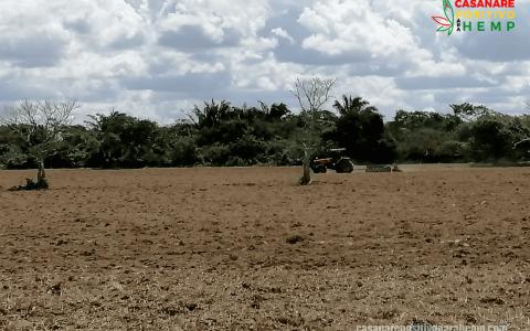 Cañamo-Industrial-en-Casanare-5