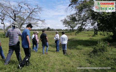 Cañamo-Industrial-en-Casanare-6